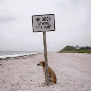 """Photo of a dog sitting just past a """"No Dogs Beyond This Point"""" sign"""