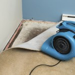 "Photo image shows wet carpet ""dry out"" after the discovery of mold under the carpet."