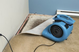 """Photo image shows wet carpet """"dry out"""" after the discovery of mold under the carpet."""